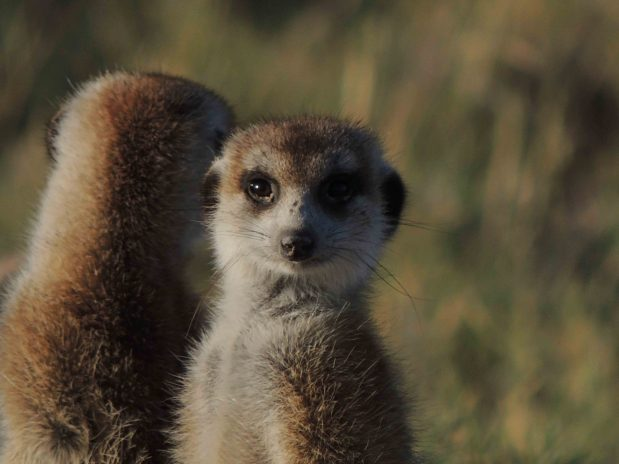 Botswana Safari – Kalahari Spezialpreis für Verliebte