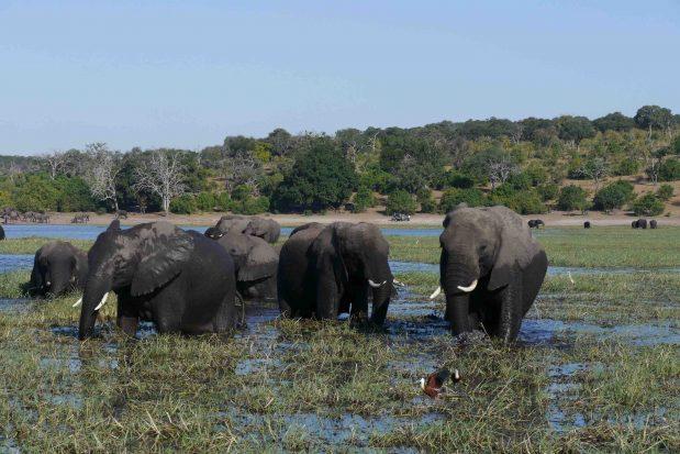Botswana Luxus Flugsafari – Buchen Sie den Chobe Nationalpark und das Okavango Delta heute für Herbst 2020