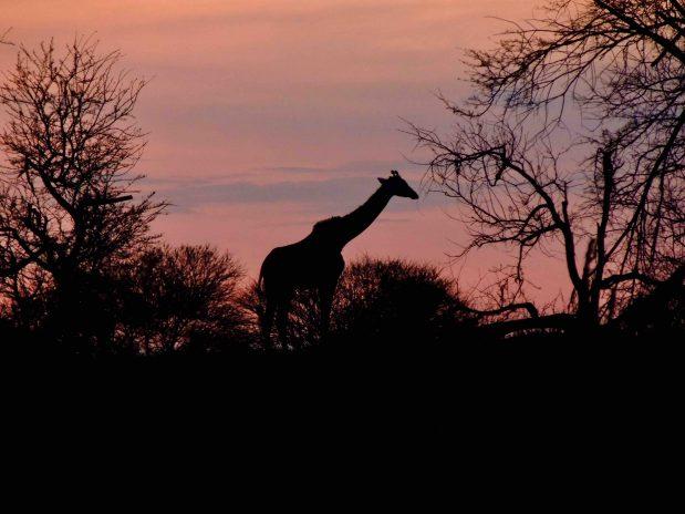 Tansania Safari – Serengeti, Ngorongoro Krater, Lake Manyara, Arusha Nationalpark und der Kilimanjaro im Bieterverfahren